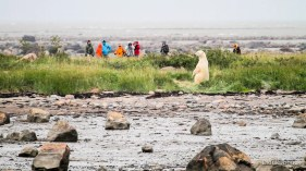 summer-polar-bear=photography-seal-river-heritage-lodge