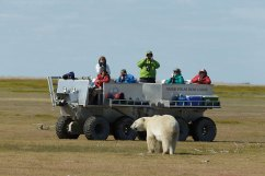 Rhino-&-bear-by-Chas-Glatzer