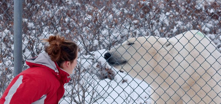 A special date on the Great Ice Bear Adventure.