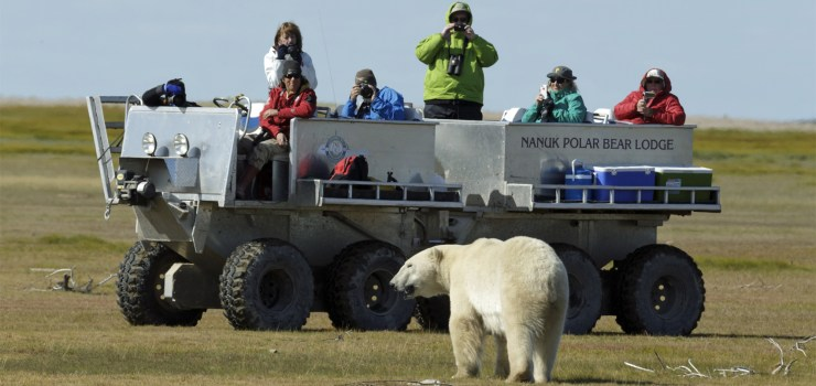 Polar bear approaches tundra rhino on the Arctic Discovery.