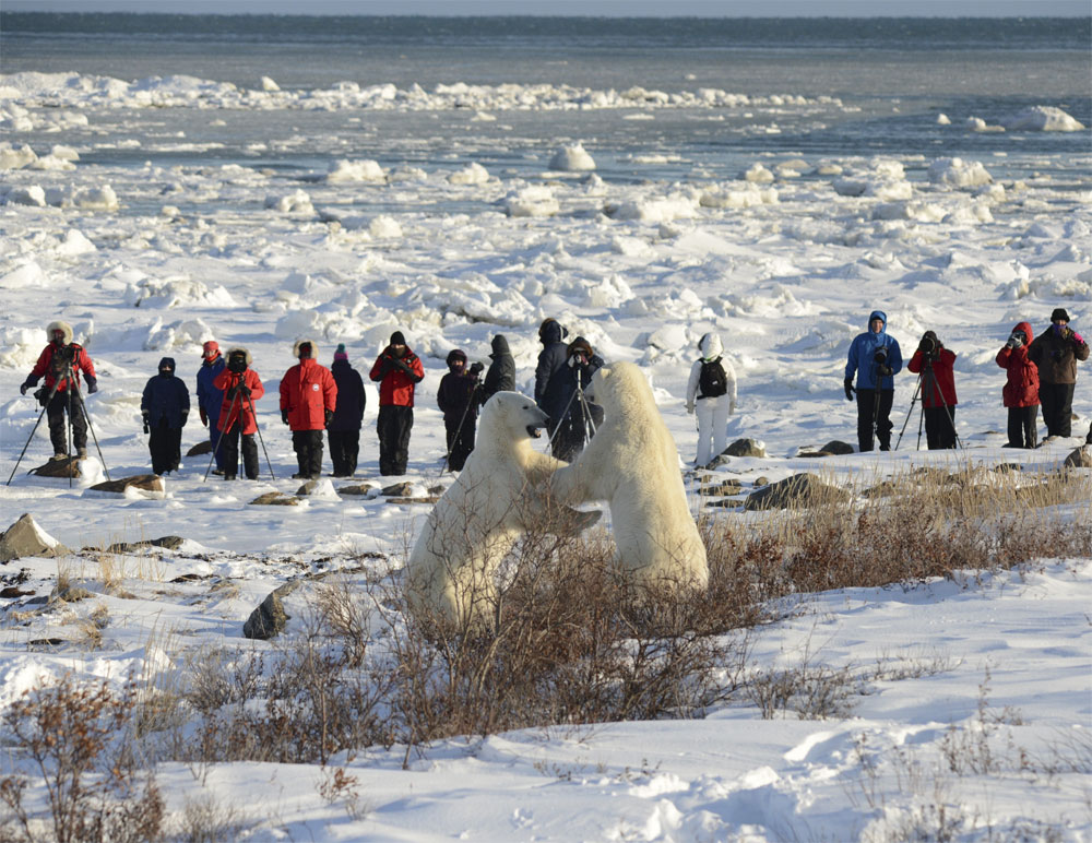 Image result for polar bear safari churchill