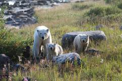 PolarBears-2-Birds&Belugas