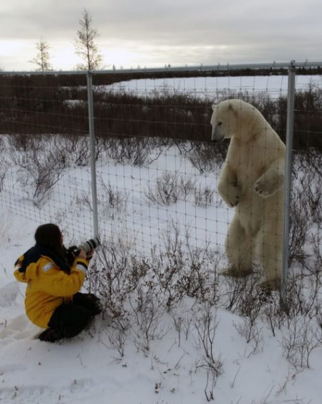 PolarBearStandingGreatIceBear