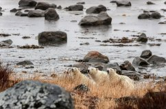 John-McCaine-PBPS-Landscape
