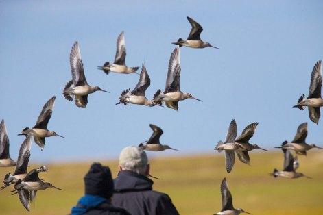 arctic-discovery-birds