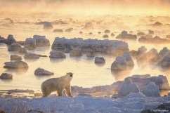 Polar bear in ice and fog at Seal River Heritage Lodge.