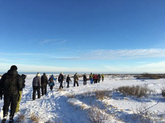Great Ice Bear guests walking.