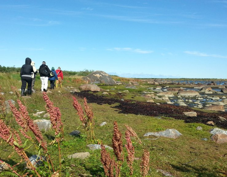 In search of berries and polar bears at Seal River. Jennifer Ennion photo.