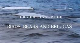 Birds, Bears and Belugas. Seal River Heritage Lodge.