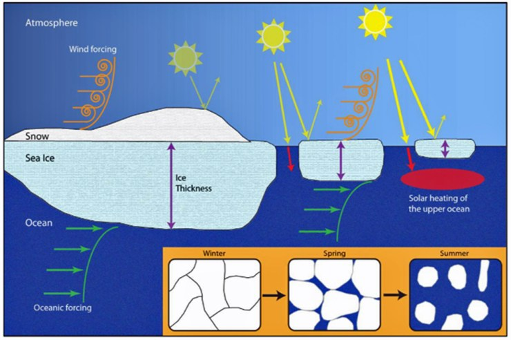 The control which sea ice has on the exchange of light, heat and momentum in the marine system.