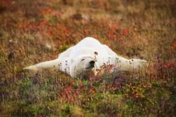 polarbearfallcolorsruth1