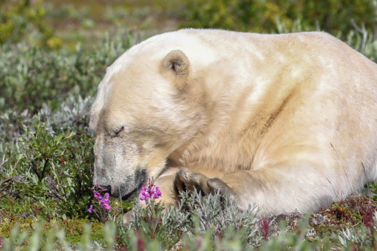 Remember to always smell the flowers. At Seal River. Judith Herrdum photo.