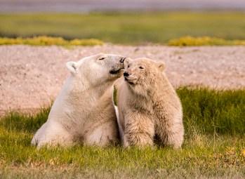PolarBearLove