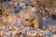 polarbearshakeandyskillen
