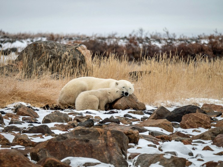 A kiss for Mom at Seal River. Scott Ahles Photo.
