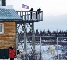 scarbrow-polar-bear-dymond-lake-ecolodge-jenn-jenni
