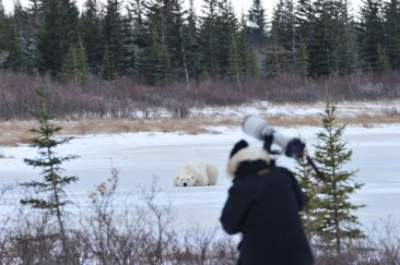 polar-bear-photography-Nanuk-Polar-Bear-Lodge-Ian-Johnson