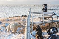 churchill-wild-polar-bear-seal-river-heritage-lodge-compund-Jad-Davenport - Copy