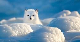 1st Place - Wildlife - Gordon Fox - Polar Bear Photo Safari - Churchill Wild 2018 Guest Photo Contest