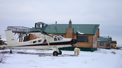 Polar bear walking in front of Dymond Lake Ecolodge. Great Ice Bear Adventure. Dafna Bennun photo.