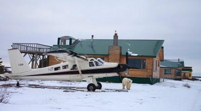 Polar bear walking in front of Dymond Lake Ecolodge. Great Ice Bear Adventure. Dafna Bennun photo.