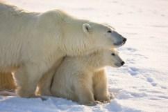 Double polar bear gaze.