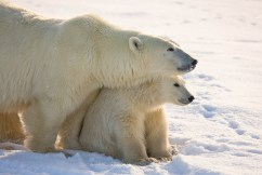 Mom and cub. Dymond Lake Ecolodge. Michael Poliza photo.