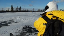 Ground-level polar bear photography.