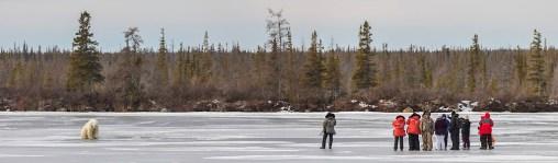 On the ice with polar bears. Great Ice Bear Adventure.