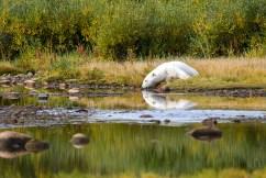 polar-bear-churchill-wild-seal-heritage-lodge-ted-jacobs
