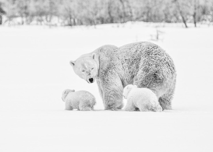 A snapshot, frozen in time. Albert Saunders photo.