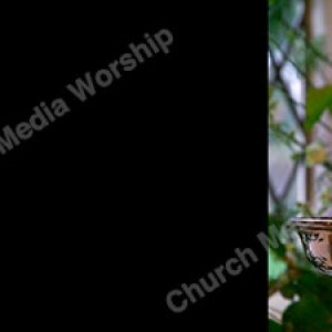 Candleabra Background Image Black Christian Worship Background. High quality worship images for use to spread the Gospel and enhance the worship experience.
