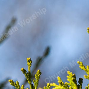 Evergreen Christian Worship Background. High quality worship images for use to spread the Gospel and enhance the worship experience.