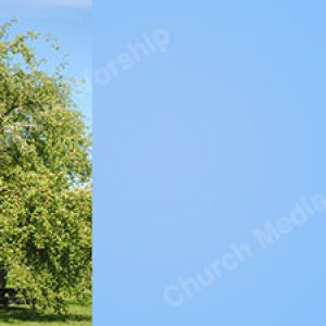 Peaceful tree sky blue Christian Worship Background. High quality worship images for use to spread the Gospel and enhance the worship experience.