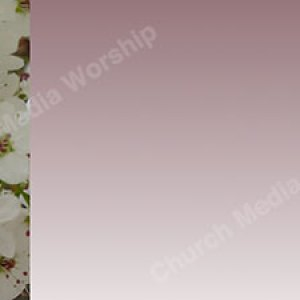 Pink Background Flower trim Christian Worship Background. High quality worship images for use to spread the Gospel and enhance the worship experience.
