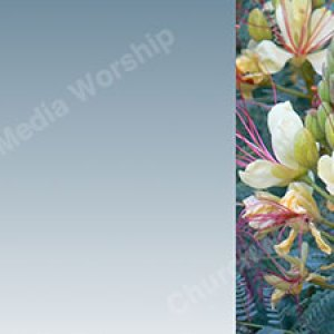 Sky Blue Flower Trim Christian Worship Background. High quality worship images for use to spread the Gospel and enhance the worship experience.