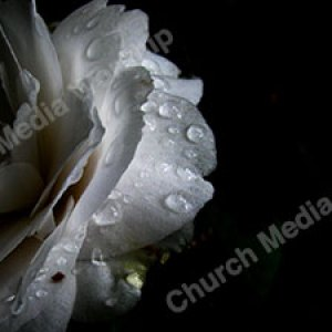 Watery Flower Black Christian Worship Background. High quality worship images for use to spread the Gospel and enhance the worship experience.