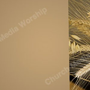 Wheat V1 tan Christian Worship Background. High quality worship images for use to spread the Gospel and enhance the worship experience.