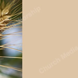 Wheat V4 Tan Christian Worship Background. High quality worship images for use to spread the Gospel and enhance the worship experience.