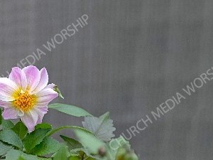 Nature flower Christian Background Images HD