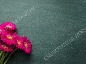 Pink Daisy on table Christian Worship Background. High quality worship images for use to spread the Gospel and enhance the worship experience.