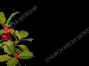 Sprig of Holly black matte Christian Worship Background. High quality worship images for use to spread the Gospel and enhance the worship experience.