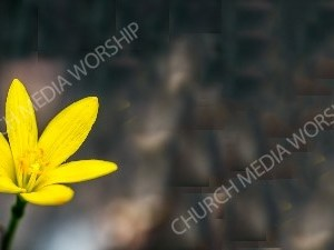 Yellow flower 33 Christian Worship Background. High quality worship images for use to spread the Gospel and enhance the worship experience.