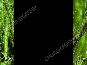 wheat and tares black Christian Worship Background. High quality worship images for use to spread the Gospel and enhance the worship experience.