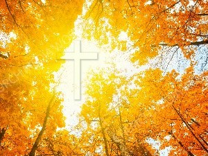 Jesus in Nature V46 Christian Worship Image. High quality worship images for use to spread the Gospel and enhance the worship experience.