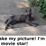 """""""Take my picture! I'm a movie star!"""""""