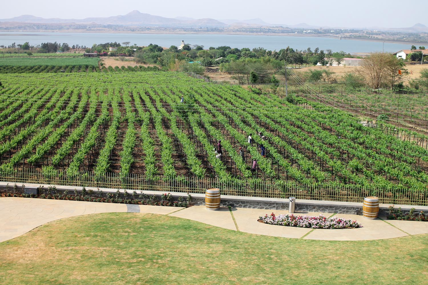 York Winery Nashik-3