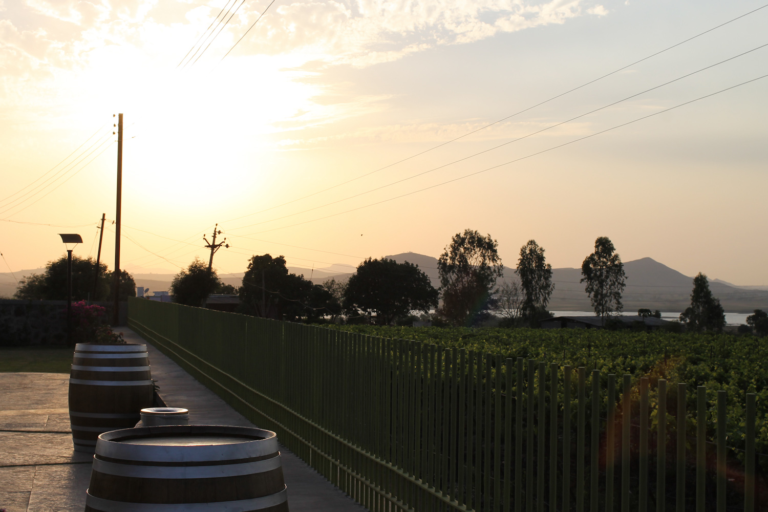 York Winery Nashik-39