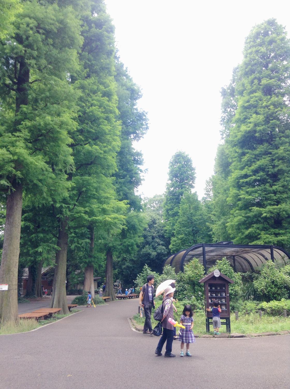 Inokashira Park Zoo-12