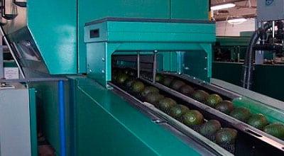 Calibradores para fruta tropical